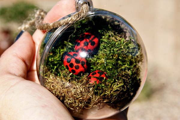 Terrarium Ornament at ThinkCrafts.com