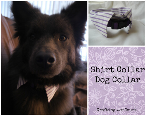 Quick & Dapper Shirt Collar Dog Collar