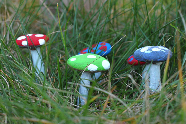 Pebble Fairy Mushrooms